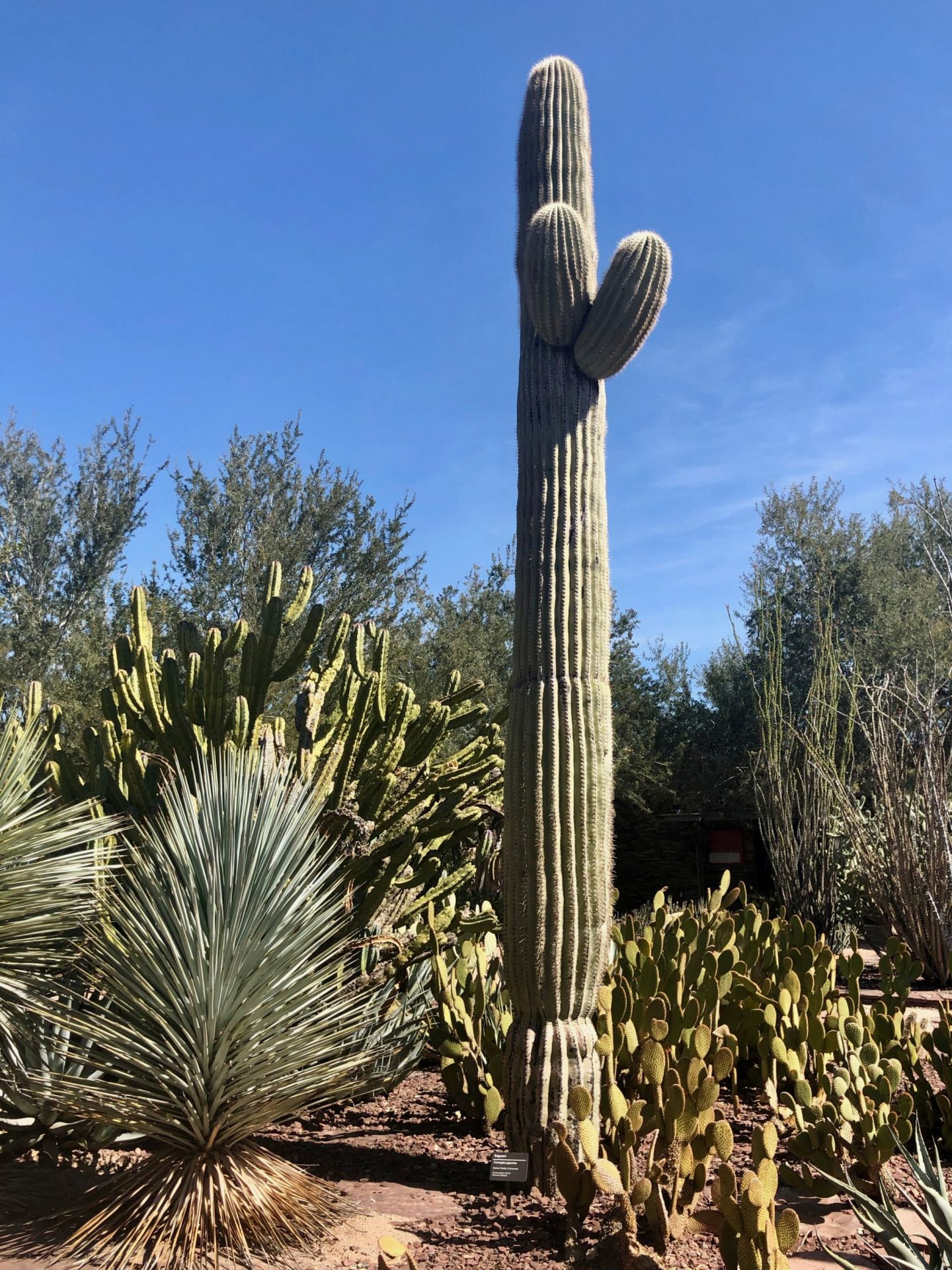 Travel Notes: Phoenix